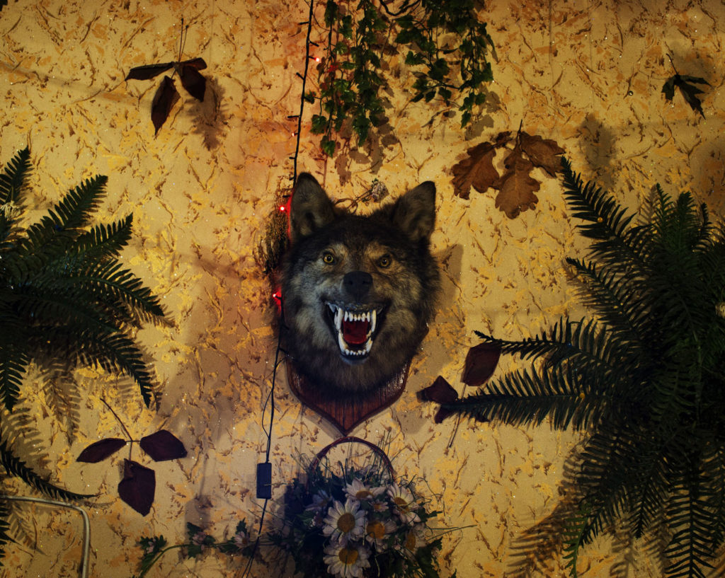 Wolf Trophy as a decoration in a discotheque just at the border of the forbidden zone of Chernobyl. Fedorovka village.
